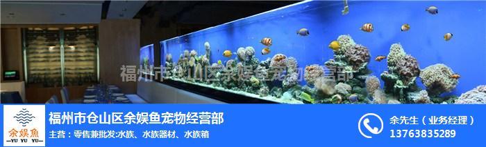 福州红龙鱼批发-福州红龙鱼-福州余娱鱼宠物经营部