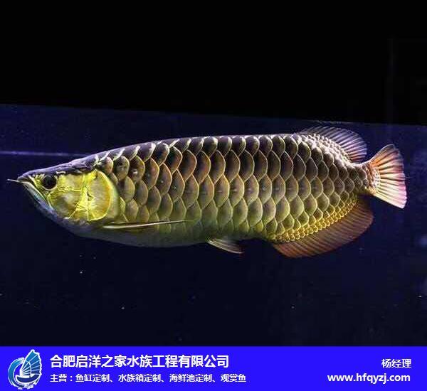 铜陵小型观赏鱼-启洋之家-品类繁多-耐低温小型观赏鱼