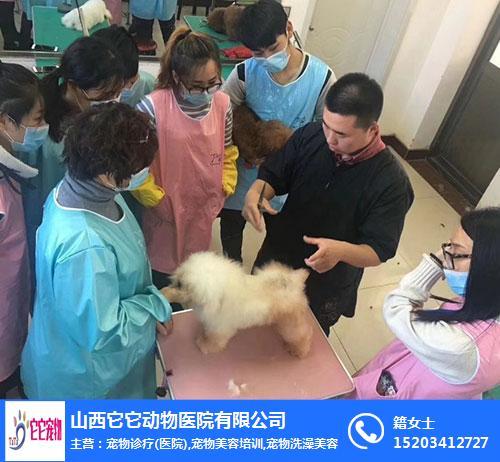 宠物美容培训机构-太原宠物美容培训-山西它它宠物医院