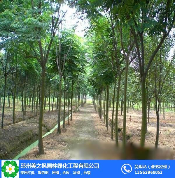 合歡樹價格-美之楓苗木綠化-12公分合歡樹價格