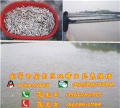 生态甲鱼图片/生态甲鱼样板图 (1)