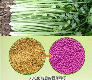 种子丸粒化机_晟海厂家直销种子丸粒化机_瓜果种子丸粒化机直销