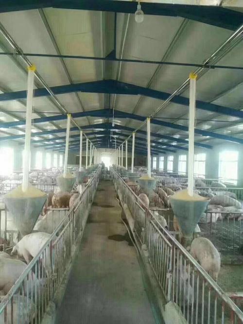 漯河自动饲喂设备价格-恒泰农牧设备