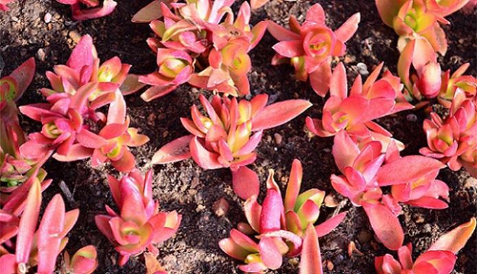温室花卉、绿馨花卉、瓦房店市花卉