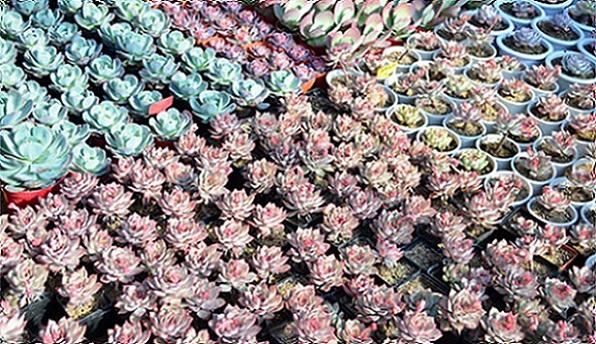 花卉,绿馨花卉,水生花卉