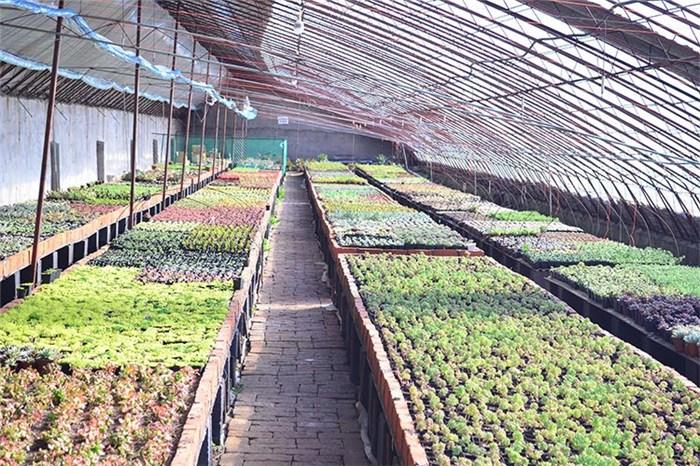 绿鑫花卉【质优价廉】(图)|花卉公司|白城花卉
