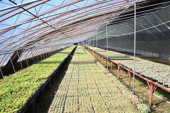 龙井市植物,风水植物,沈阳绿馨花卉园艺公司(优质商家)