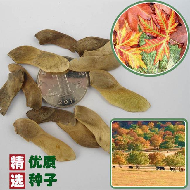 各种蔬菜种子、蔬菜种子、快活林苗木