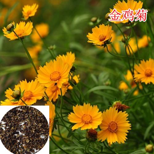 快活林种业(图)|四季开花卉花卉种子|花卉种子
