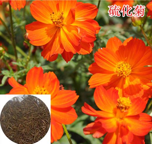 供应花卉种子、快活林种业、花卉种子
