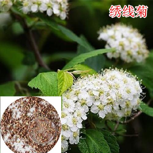 多年生花卉种子,快活林种业,花卉种子