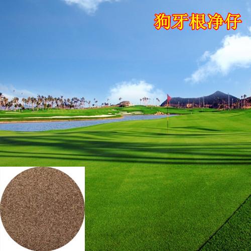 狗牙根与黑麦草混播图片/狗牙根与黑麦草混播样板图 (1)