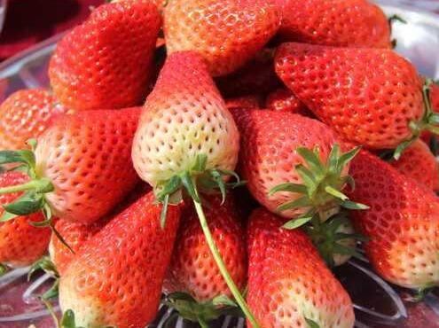 草莓苗、海之情、甜心一号草莓苗多少钱