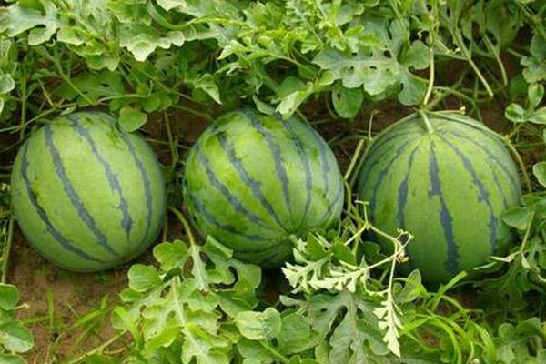 百恩生物(图)_果蔬类生物杀虫剂_生物杀虫剂