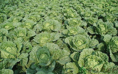 北京生物肥料|百恩生物|生物肥料供应商