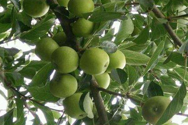 生物肥料销售区域_百恩生物(在线咨询)_生物肥料