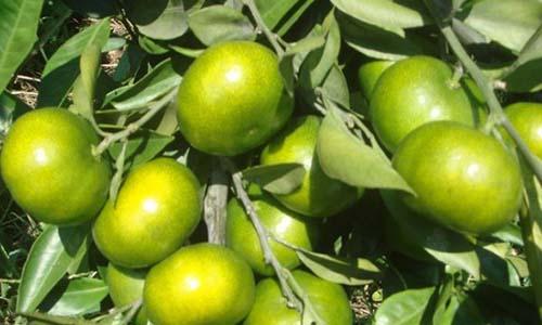 生物肥料应用广泛|百恩生物(在线咨询)|生物肥料