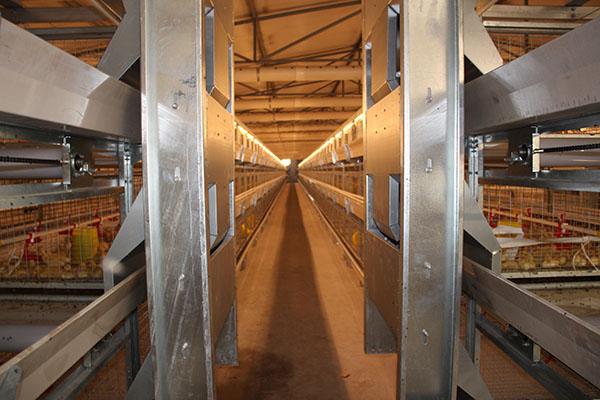 肉鸭笼|方圆笼具|肉鸭笼生产