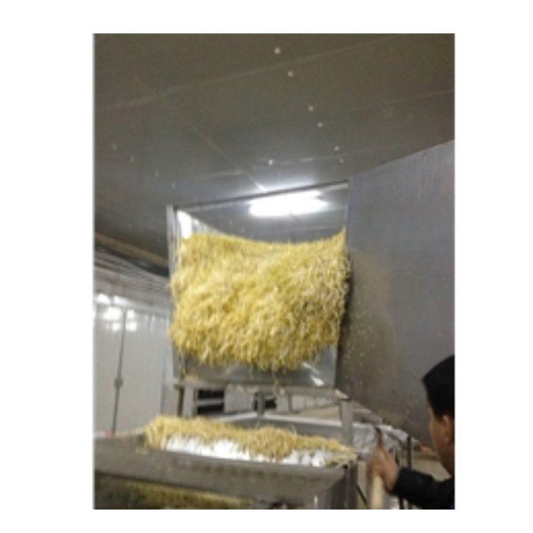 销售无公害豆芽机使用方法 豆芽王机械 专业的无公害豆芽机怎么用
