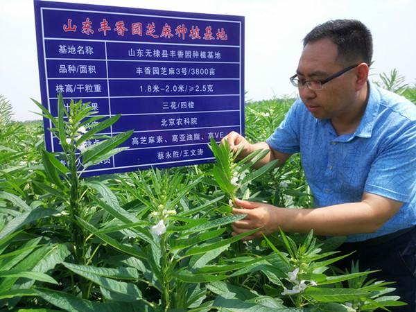 芝麻油出口生产企业、芝麻油、丰香园芝麻食品(查看)