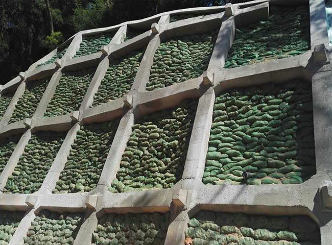 种子|福州景晖生态工程|福州白三叶种子