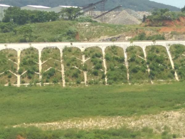 福州百喜草种子_种子_福州景晖生态工程