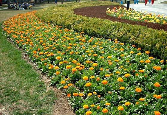 花卉种子多少钱一斤_景江园林绿化_德宏花卉种子