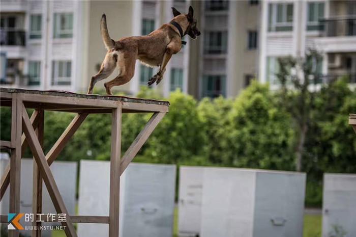 宠物训练,宠物训练飞盘,西安和谐宠物(优质商家)