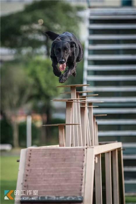 宠物训练_西安和谐宠物_宠物训练飞盘