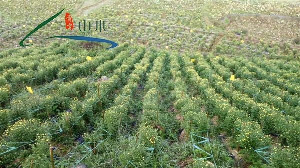 绿色农副产品-贵州农副产品- 贵州山水贵客文化(查看)