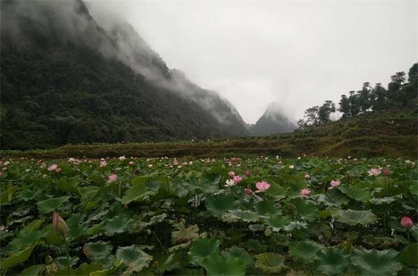 贵州农副产品-贵州山水贵客文化旅游-农副产品加工