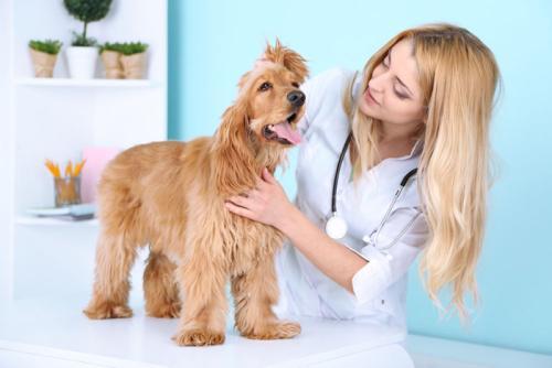 宠物用品、安徽国宠宠物医院、合肥宠物用品