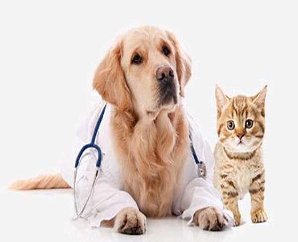 宠物诊疗_合肥宠物_安徽国宠宠物医院