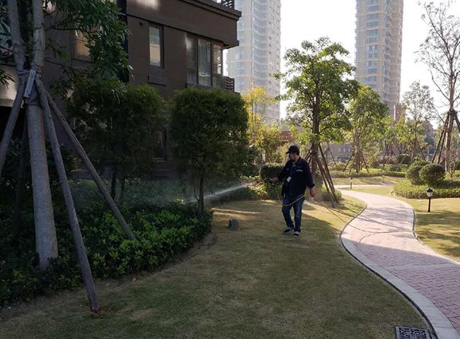福州白蚁|福州环宇除虫灭害|白蚁防治站