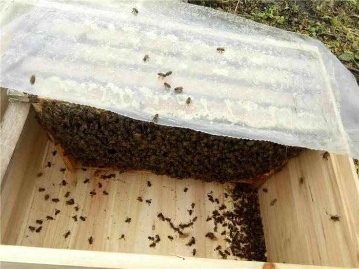 貴州中蜂養殖|中蜂養殖|貴州蜂盛