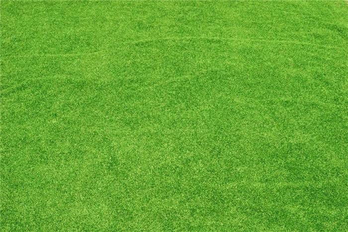 草坪供应图片/草坪供应样板图 (1)