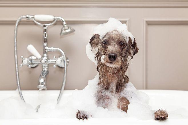 宠物清洁耳道-宠物-华爱宠物美容