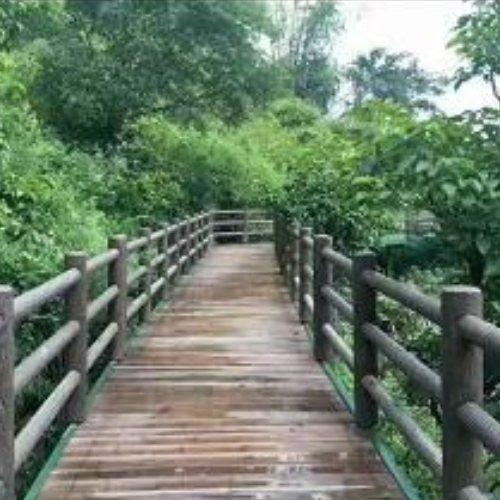河道水泥仿树皮栏杆哪家便宜 基炕水泥仿树皮栏杆定制 丽景建材