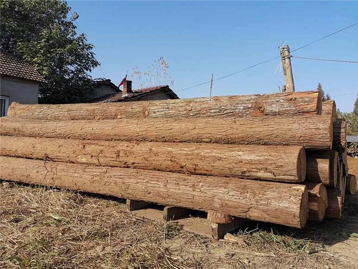 泰安杉木桩价钱行情
