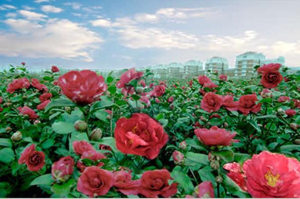 南昌园林绿化工程_景致花园绿化(在线咨询)_井冈山市绿化工程