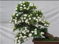 鲜花批发|汉川市鲜花|众芳园艺