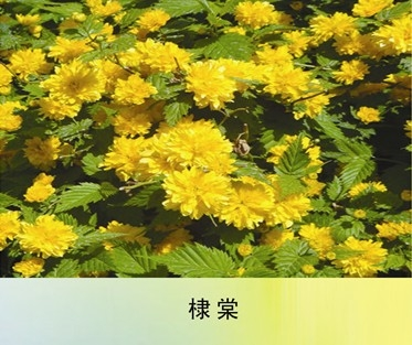 威海宿根花卉,丰林宿根花卉,宿根花卉哪家好