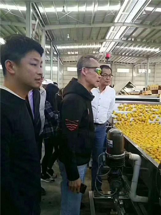 云南速冻机_诸城旺源机械_速冻机蔬菜