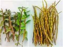 种植业、种植、景绿丰