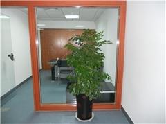 厦门鲜切花鲜花 |室内绿植销售|室内绿植