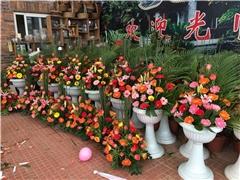 翔安花卉市场|花卉市场|翔安鲜切花鲜花